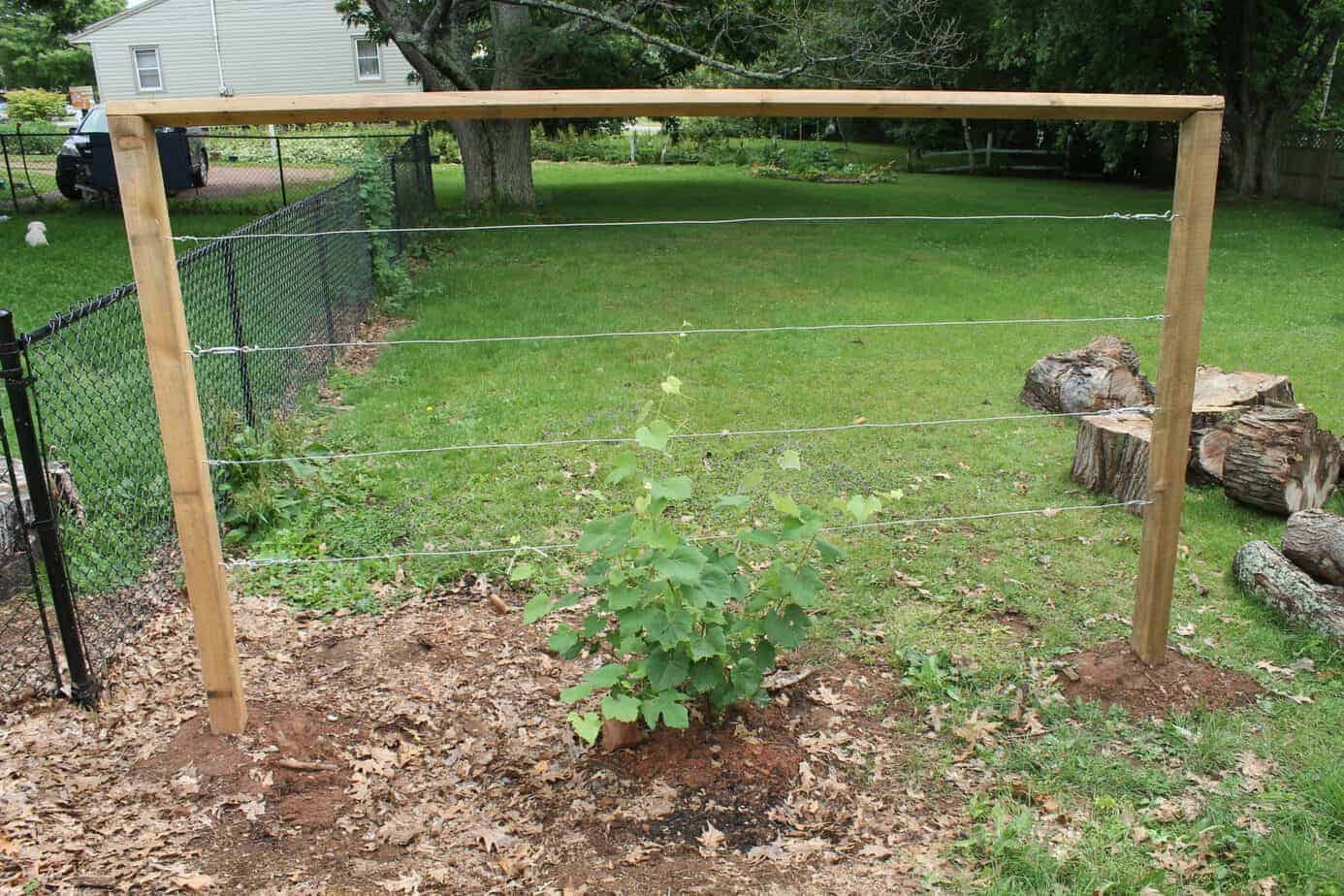 How to Build a Wire Trellis for Grapes