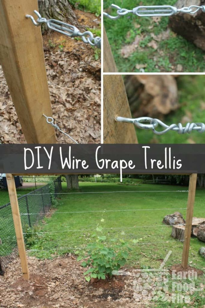 Learn how to build a wire trellis with this DIY weekend project. This trellis is great for climbing vegetables, grapes and even roses!