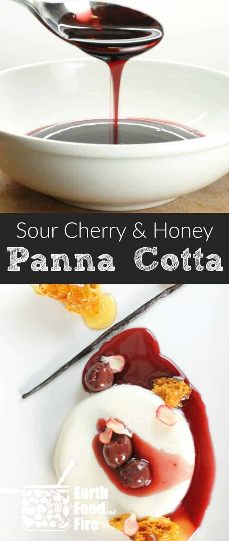 A surprisingly simple yet stunning dessert, this Honey Panna Cotta, garnished with cherries & sponge toffee is sure to impress any guest or date! #pannacotta #holiday #dessert #easydessert #cherry #sourcherry #honey