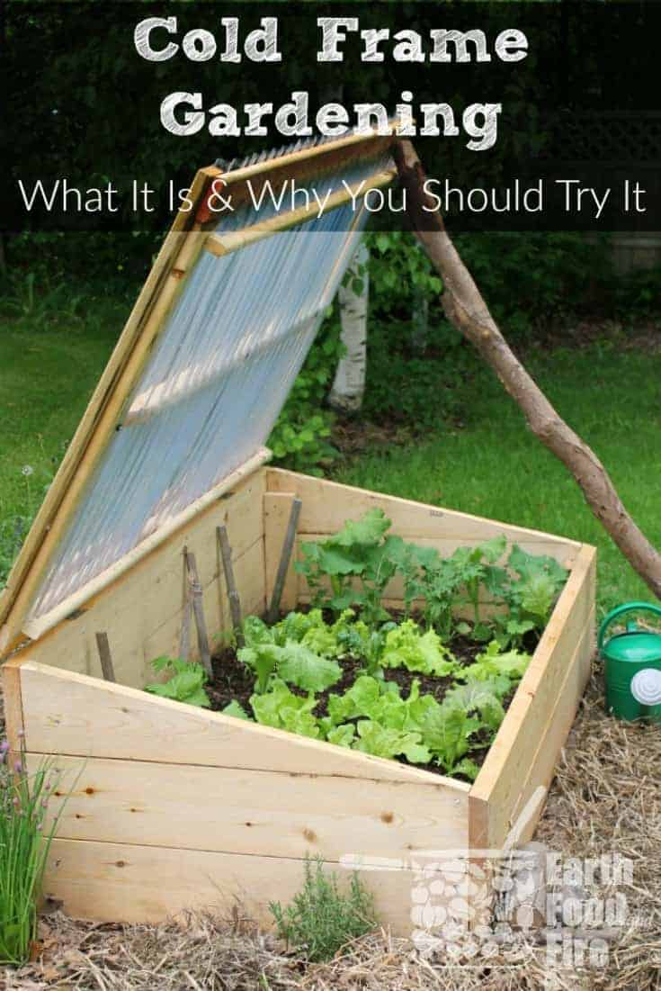 There are many benefits to gardening in a cold frame in cooler climates. Learn what cold frame gardening is, how it will benefit your garden, and what to grow in one to increase your vegetable harvest. #gardening #raisedbeds #coldframe #gardeningtips