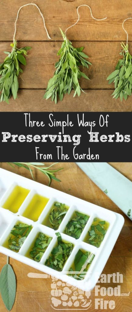 Preserving herbs is an easy way to save money, stock your spice shelf, and create homemade condiments. Learn the 3 easiest ways to store your fresh herbs, including drying herbs, and infusing your own oils!