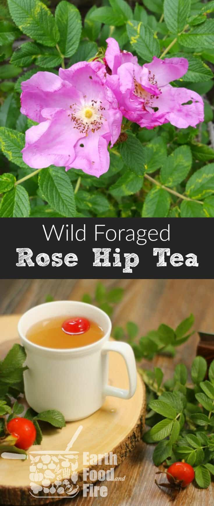 A tart and slightly fruity tea made with foraged wild rose hips, this drink is excellent for use in combating colds and flus due to it's high Vitamin C content. #rosehips #tea #foraging #healthy