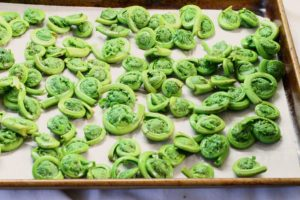 blanched fiddleheads layed out on a tray ready to be frozen