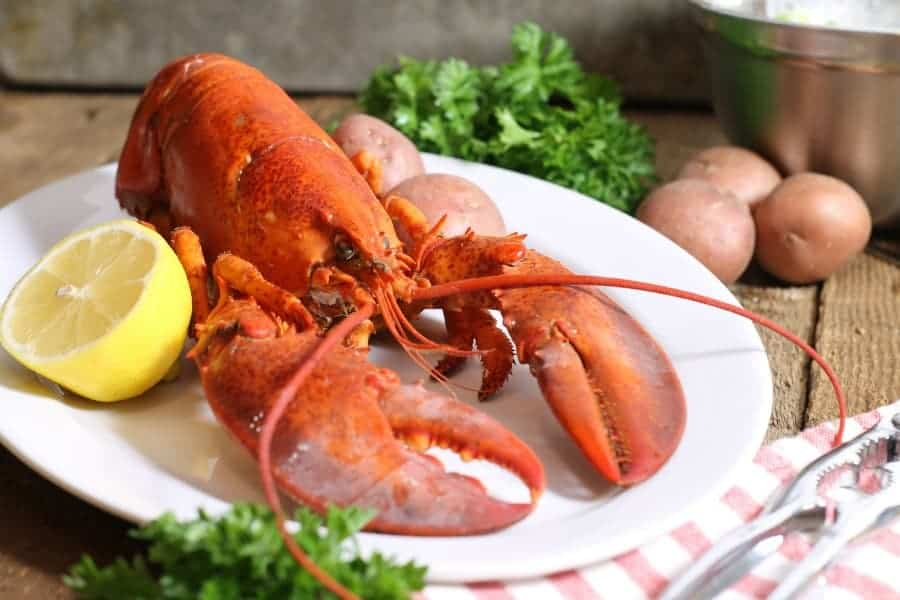 A freshly cooked lobster on a white platter. Learn how to cook lobster at home!